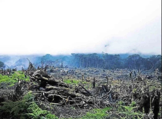 Farmers burned parts of Mt. Pulag due to crop infestation