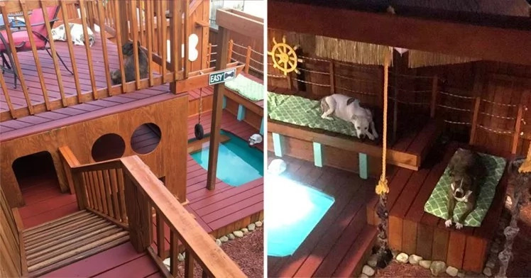 Man spends two years to build incredible mansion for his dogs, because they deserve it
