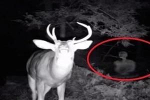 Un hombre puso una cámara en su porche y lo que grabó le congeló la sangre