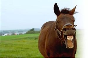 Violó a un caballo y aseguró que el animal lo sedujo