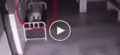 What the camera captured after her death makes you believe in the eternal life (video)