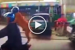 Epic video of Pinoy riding motorcycle with well-behaved pet dog shocks netizens