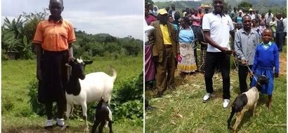 Goats to the rescue! See how goats are keeping girls in school in Uganda (photos)