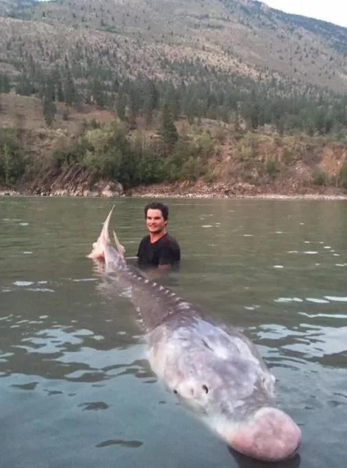 Atraparon un esturión de 300 kilogramos en Canadá (VIDEO)
