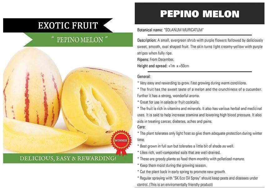 Pepino melon health benefits