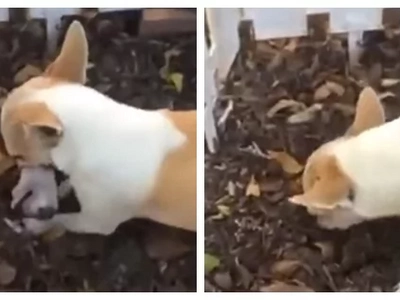 Video shows this mother dog digging SOMETHING... Tears filled my eyes when I discovered WHAT was that!