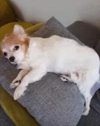 Dog's reaction after owner raised his middle finger went viral