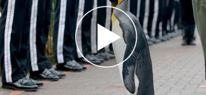 VIDEO: This Penguin earns medal from Norwegian King; Find out why