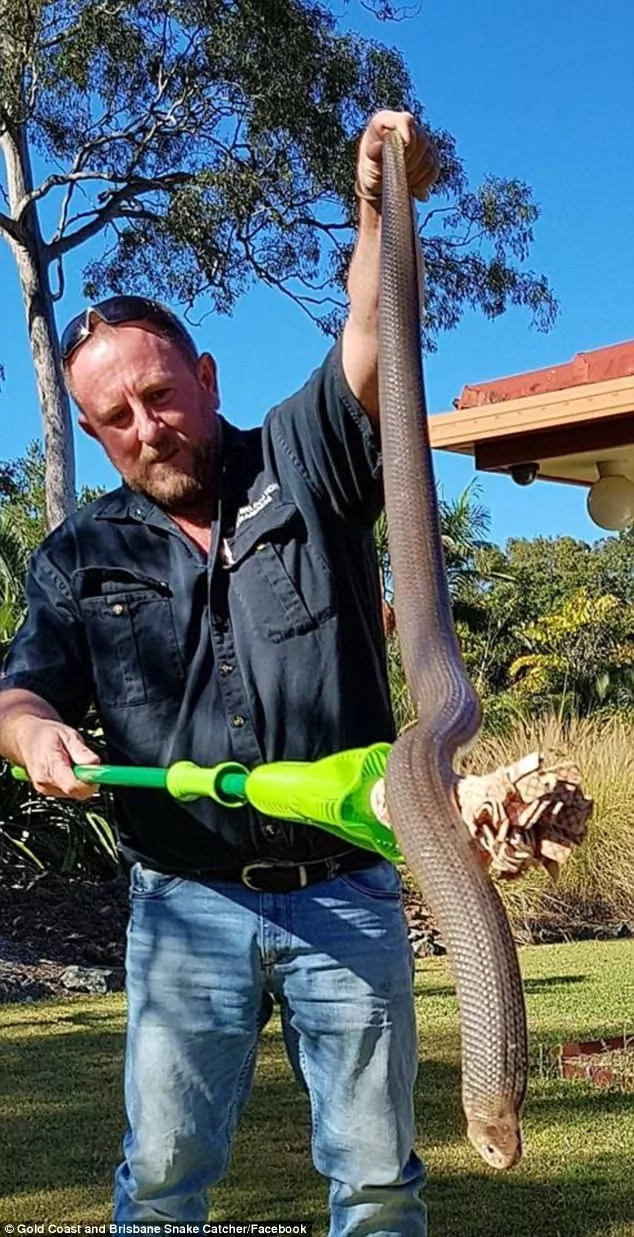 """It tried to eat me!"" Man claims after capturing a venomous 1.7 meter snake in his backyard"