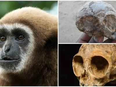 Scientists find 13-million year old baby monkey, it is believed to be mankind's earliest ancestor