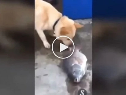 Heartbreaking video shows compassionate dog desperately trying to save dying fish