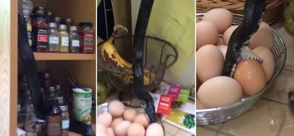 They heard a loud bang coming from the kitchen. Then they saw a calm intruder stealing their food