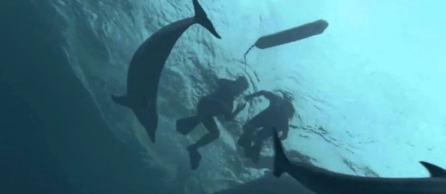 A list of the 10 most brutal shark attacks in recent history