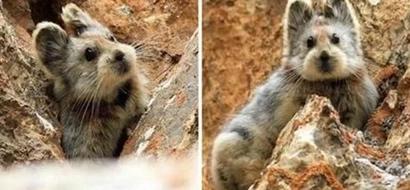 """¡Impactante! Extraño animal conocido como """"Conejo Mágico"""" es visto por primera vez en 20 años"""