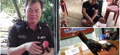 Bizarre! Drug dealer arrested after forcing chicken to swallow condoms filled with drugs