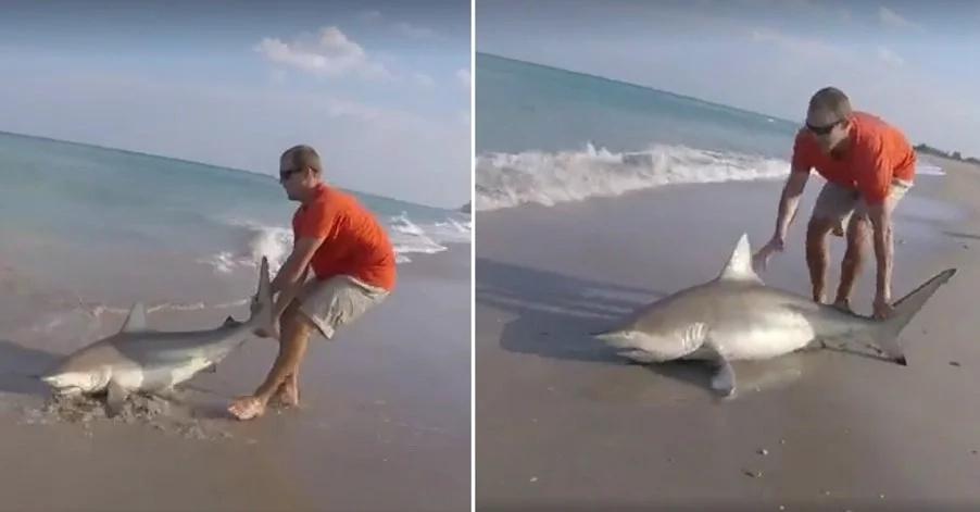shark-hook