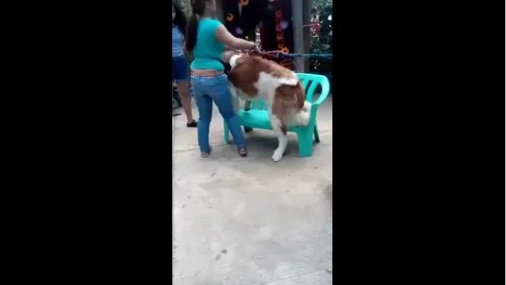 dog-cruelty