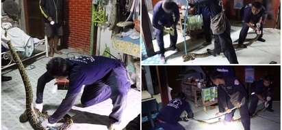 Snake catchers wrestle with 3-meter python after woman finds it in her home
