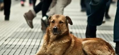 Este maravilloso perrito aprendió el oficio de reciclador y se gana el pan ayudando a su amo enfermo
