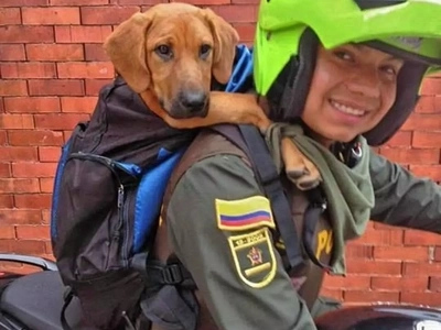 La conmovedora historia de Thomas, el valiente perro policía que todos adoran en Bogotá