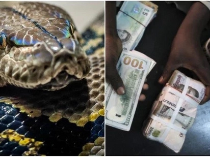 Govt official claims a snake swallowed KSh 10 million missing cash