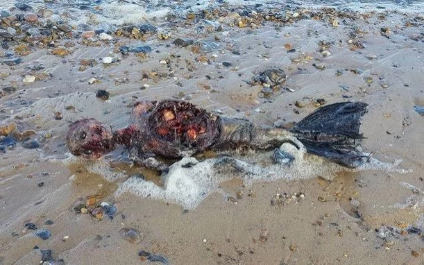 Mysterious body of a dead mermaid washed up on a beach