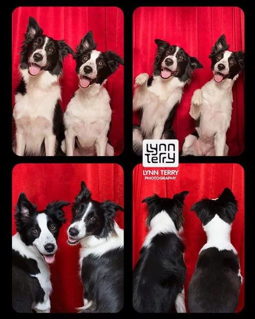 Dogs act like humans and enjoy their time inside photo booths
