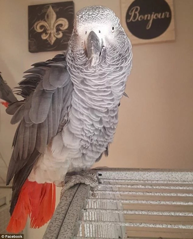 Woman, 49, sentenced to life in prison after her pet parrot revealed she murdered her husband