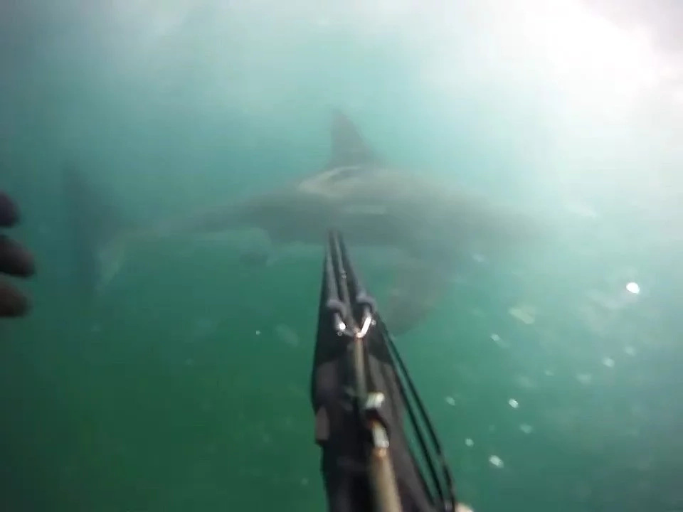Shocking footage of how a diver was attacked by a giant shark