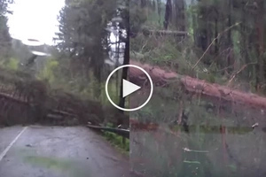 Like a HORROR film scene: all trees started to fall down due to MYSTERIOUS reason