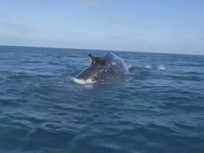 They Think It Was a Seal Swimming in the Water. Seconds Later, WATCH What Appears Beneath Him...