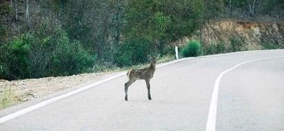 Encontraron un ciervo bebé en el camino y esto fue lo que hicieron para rescatarlo