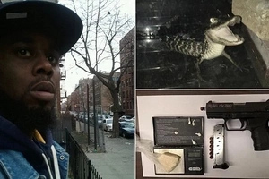 Police find cocaine, loaded handgun, and CROCODILE in same apartment (photos)