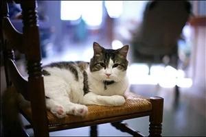 Éste gato milagroso ha predicho la muerte de más de 100 personas en un ancianato