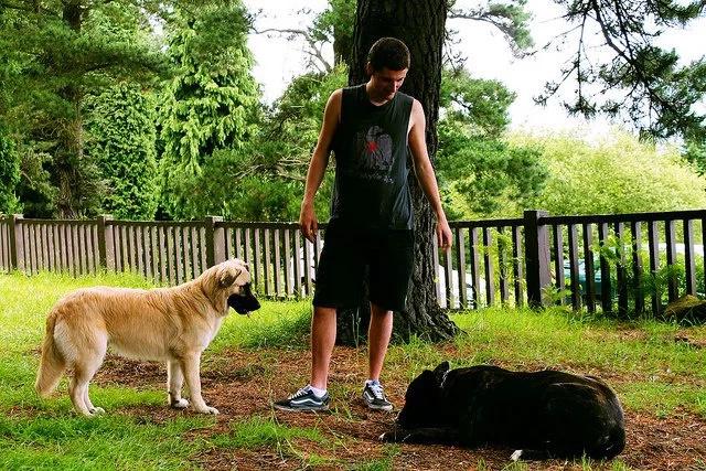 La impresionante comunicación entre perros y humanos