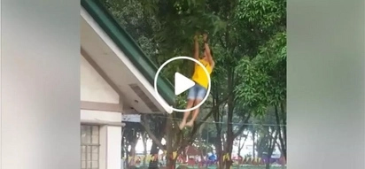 Witty group shows how they pick mangoes straight from the tree through their amazing cheer dance move
