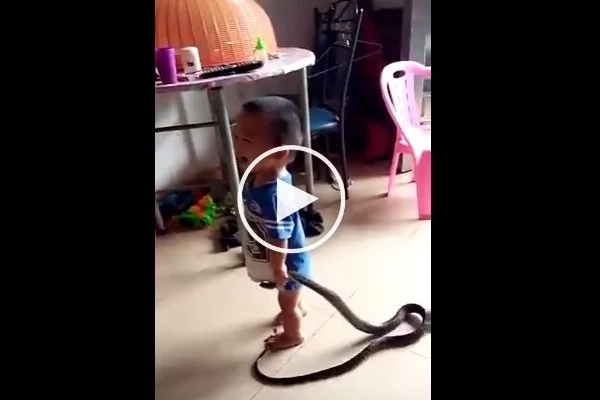 Meet 2-year-old baby boy who plays with a snake (photos, video)