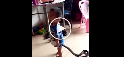 Watch a video of a Badass 2-year-old kid plays with a snake