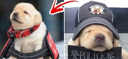 Police officers utilize adult dogs in operations. These officers are experiencing cuteness overload when these pups became members of the force!
