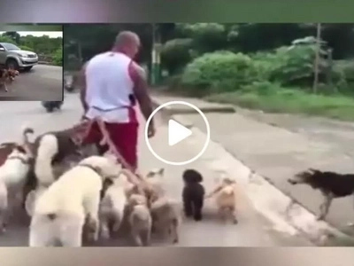 Pinoy walks his 12 dogs using one leash in viral video....you wouldn't believe how behaved his dogs are!