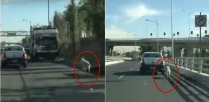 No podía creer lo que estaba pasando al ver a un perro corriendo en la autopista así que lo siguió