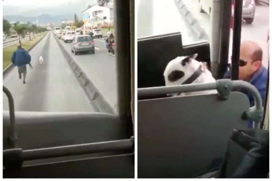 Arriesgó su vida para salvar a un perro, mientras todos se reían de él
