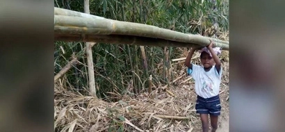 Your heart will break when you find why this child carries bamboos from the mountain everyday