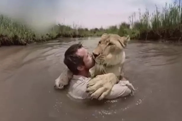 Brave! Man saves 2 lions from hunter's bullet, explains why he did it in breath-taking footage