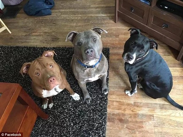 The three pit bulls. It is unclear which one caused Susannah's injuries