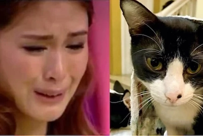 Grabe naman yun! Someone did something horrible to Heart Evangelista's cat