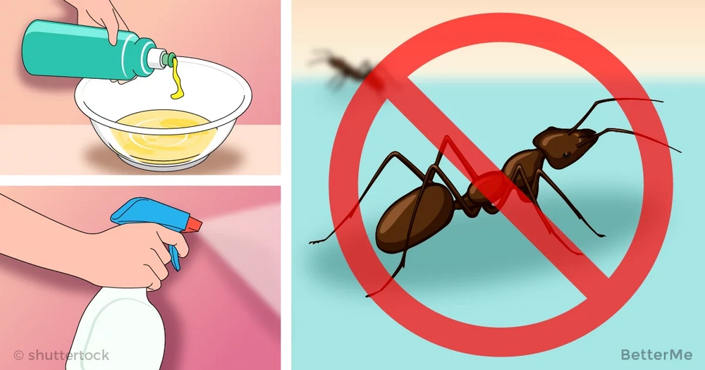 Every woman should know these 10 ways to keep ants from home