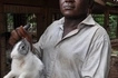 Why Kenyan women are now going crazy over rabbit's Urine