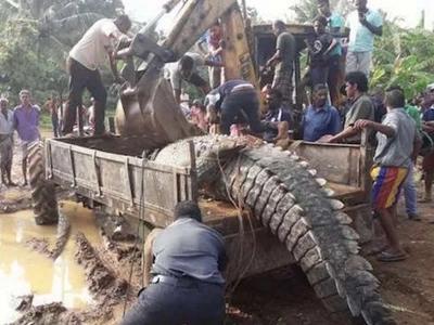 Gargantuan 1-Ton Crocodile Got Stuck In Sri Lanka Canals