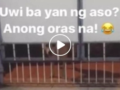 Uwi ba yan ng aso? Pinoy owner hilariously scolds dog for coming home late at night